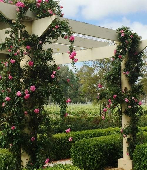 Barossa House Garden